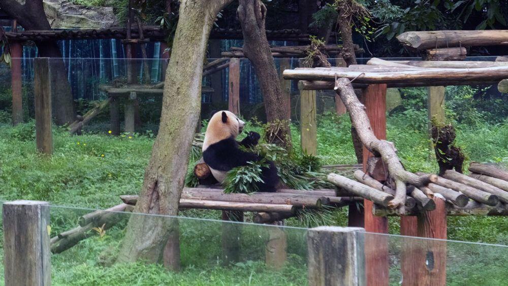 Les meilleures choses à faire à Chongqing, en Chine 3