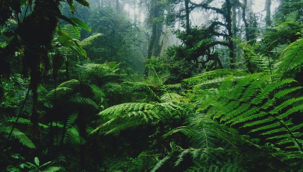 Découvrez la forêt tropicale