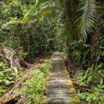 Attractions principales dans Sarawak, Bornéo