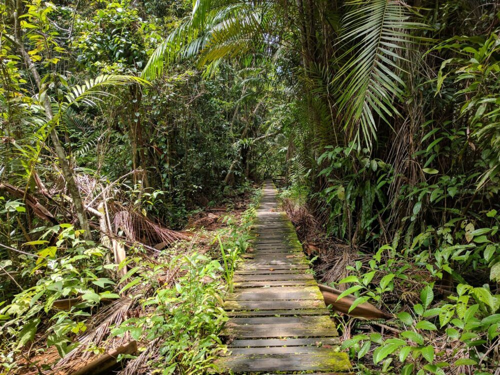 Hike Through the Jungle in Bako National Park