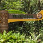 5 lieux pour voir les orangs-outans à Bornéo