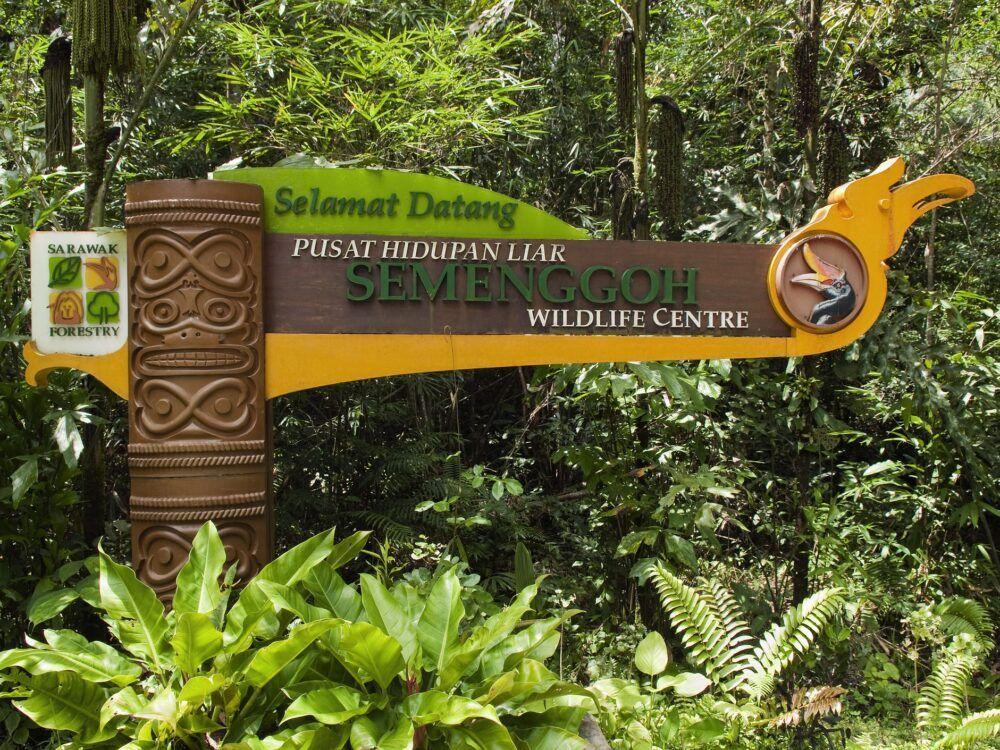 5 lieux pour voir les orangs-outans à Bornéo 4
