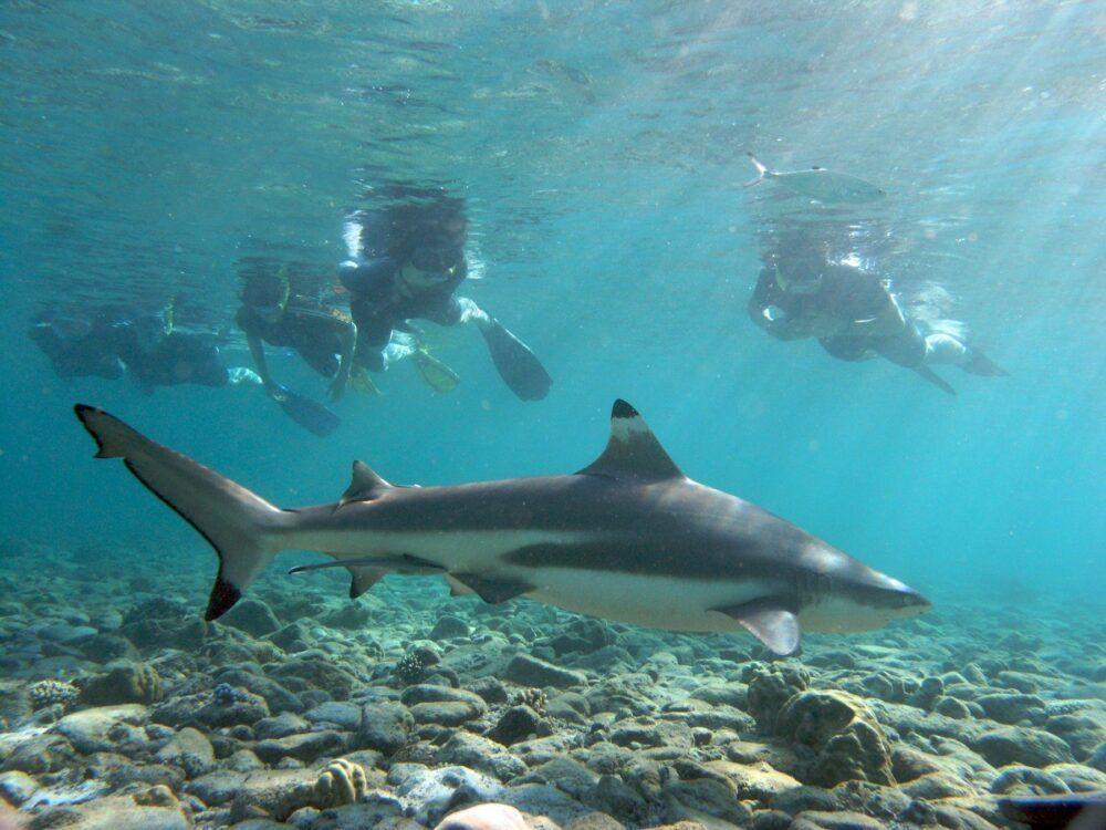 Les 8 meilleurs sites de plongée près de Phuket, en Thaïlande 3
