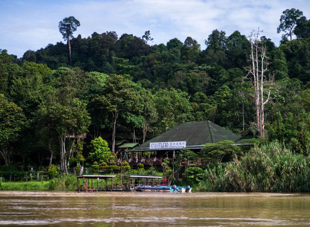 Voir la faune exotique sur la rivière Kinabatangan