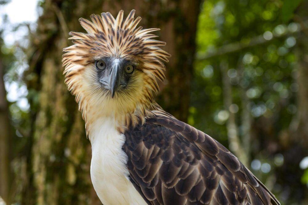 Découvrez les oiseaux les plus rares des Philippines
