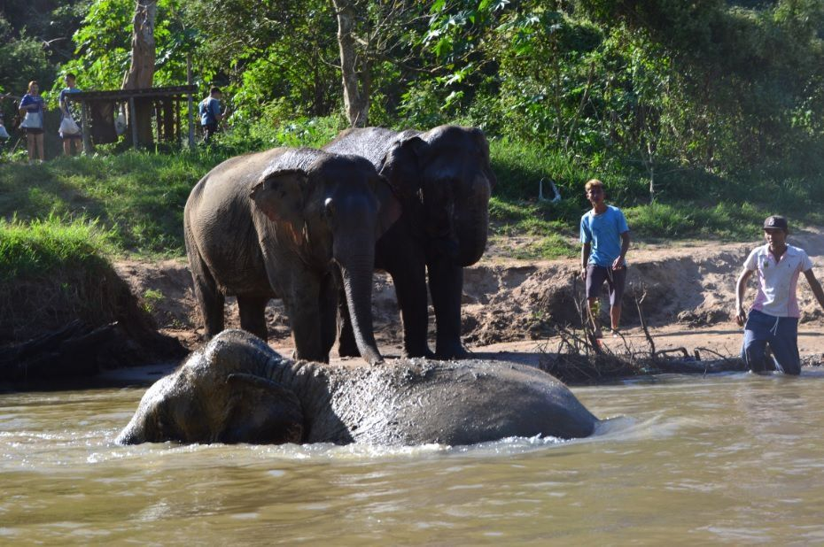 Entrez dans la grotte des éléphants