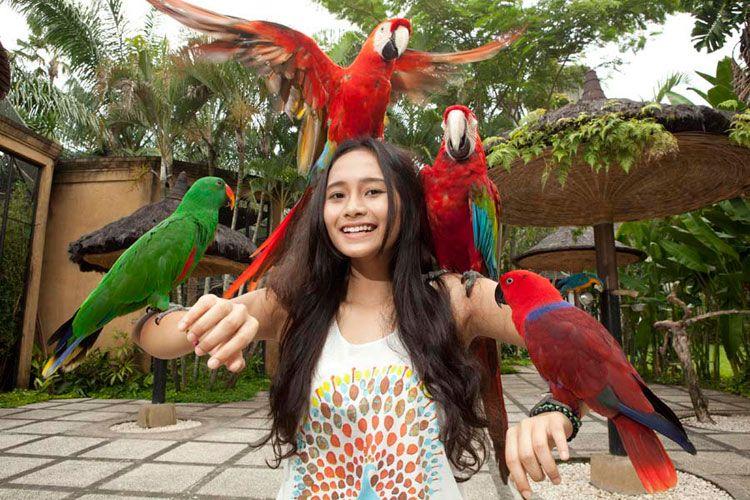 Feed the Birds at Taman Burung Bali Bird Park