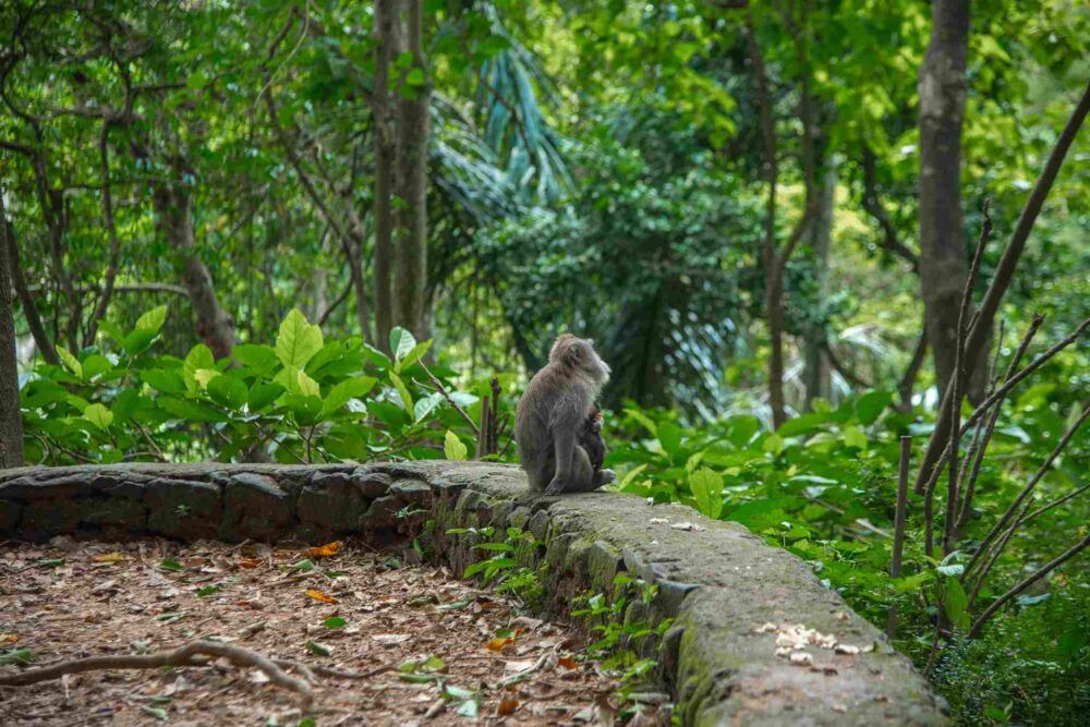 Get Lost in the Ubud Monkey Forest