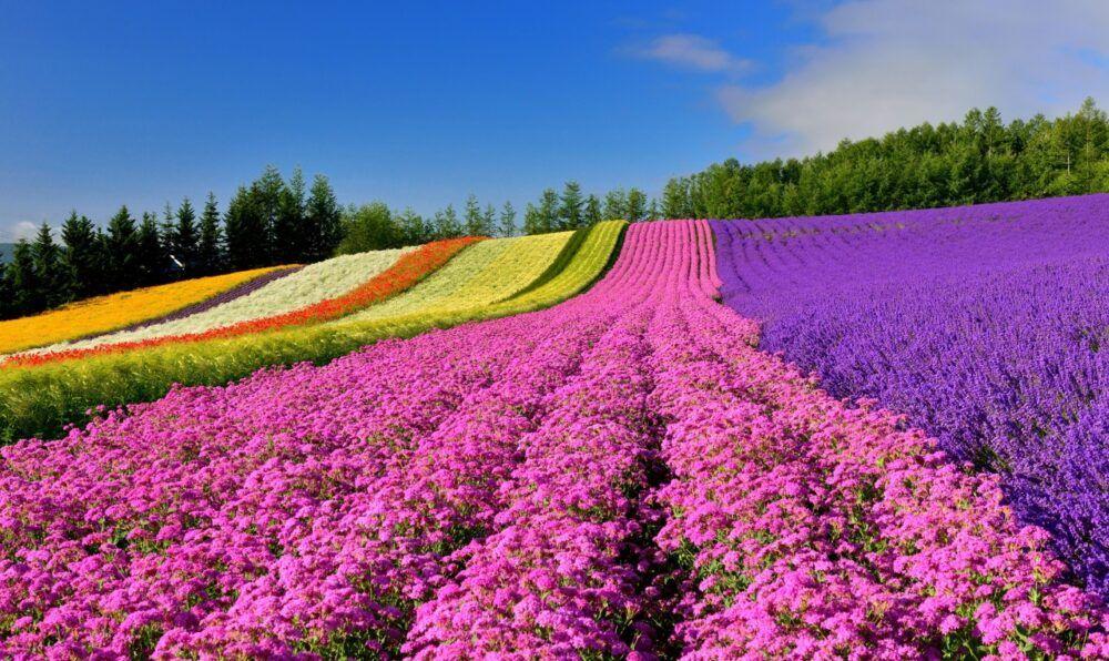 Hokkaido Scenic Byways Japón