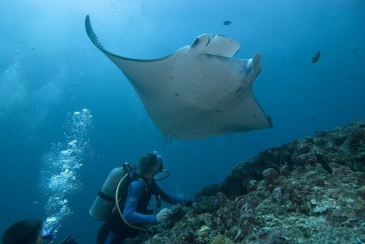 Koh Similan : Destination plongée et snorkeling