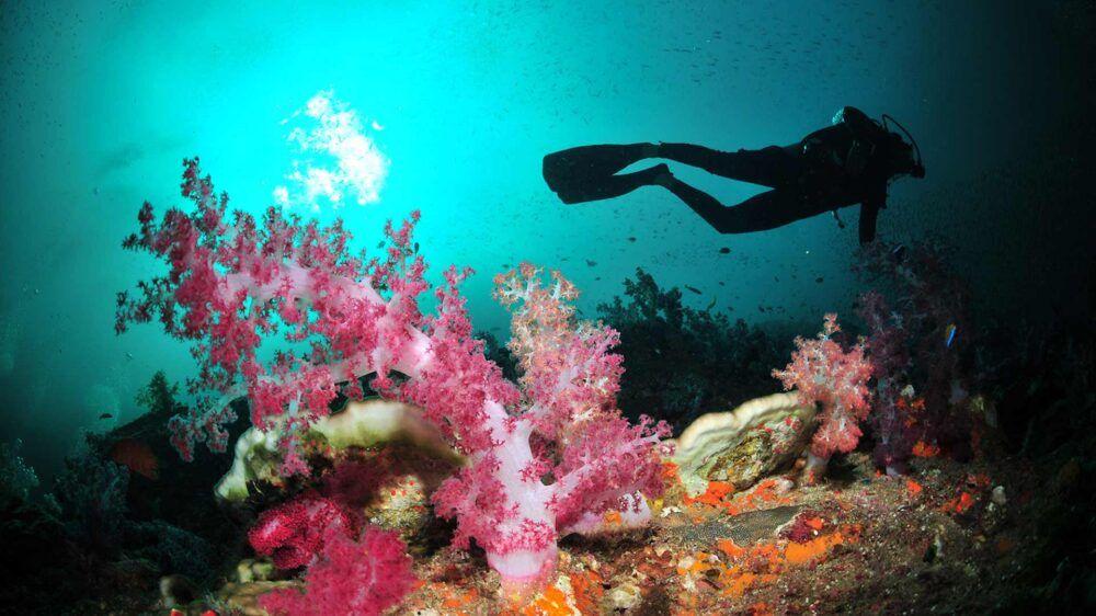 Koh Surin : la meilleure plongée dans les Andamans