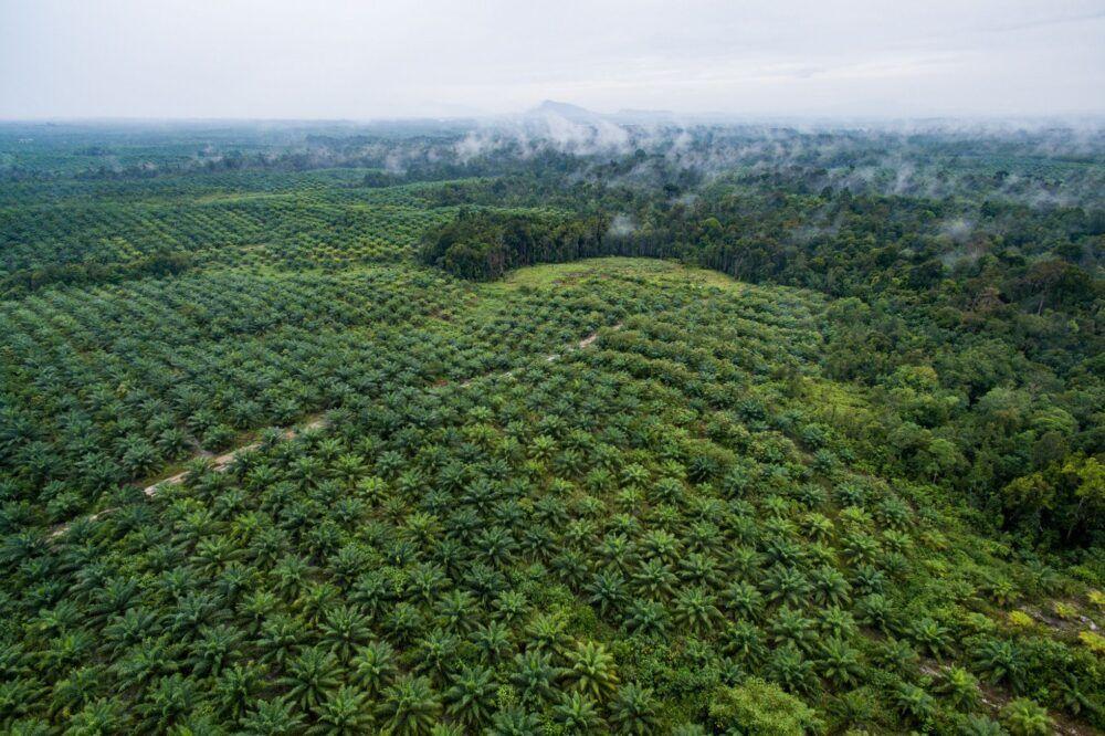 Le problème de l'huile de palme à Sumatra