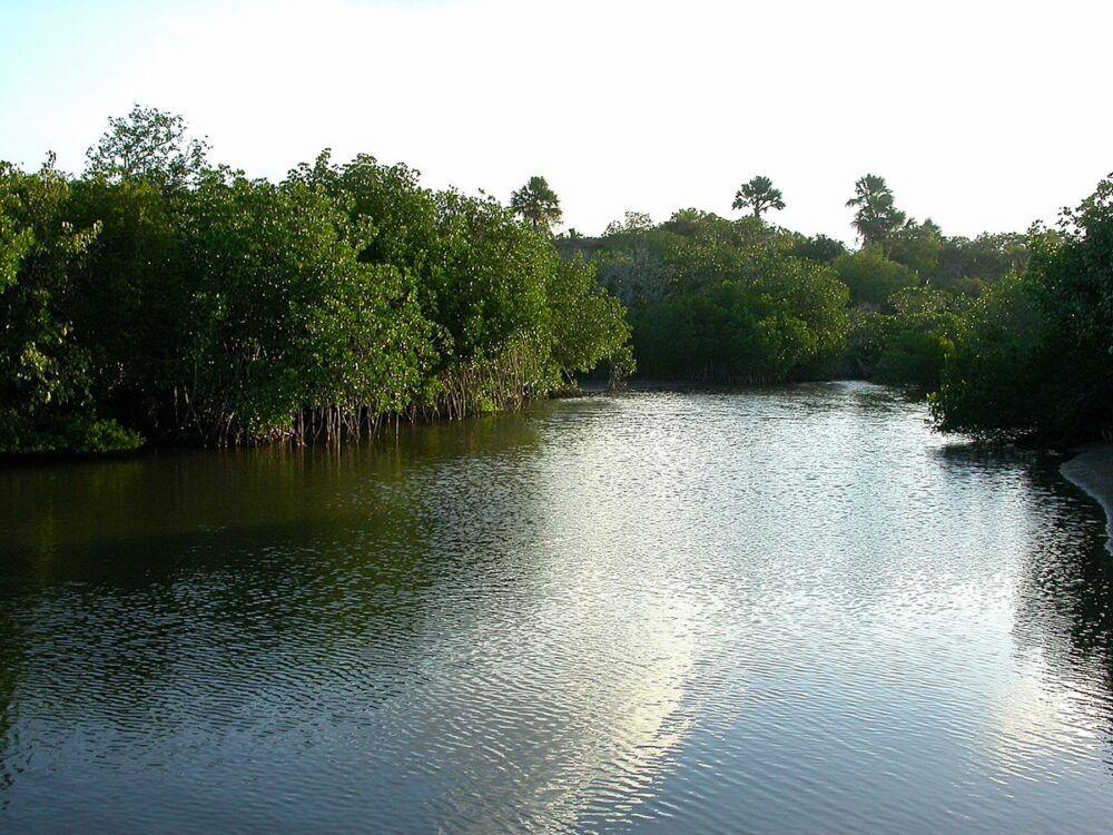 Parc national de Baluran : Un morceau d'Afrique à Java