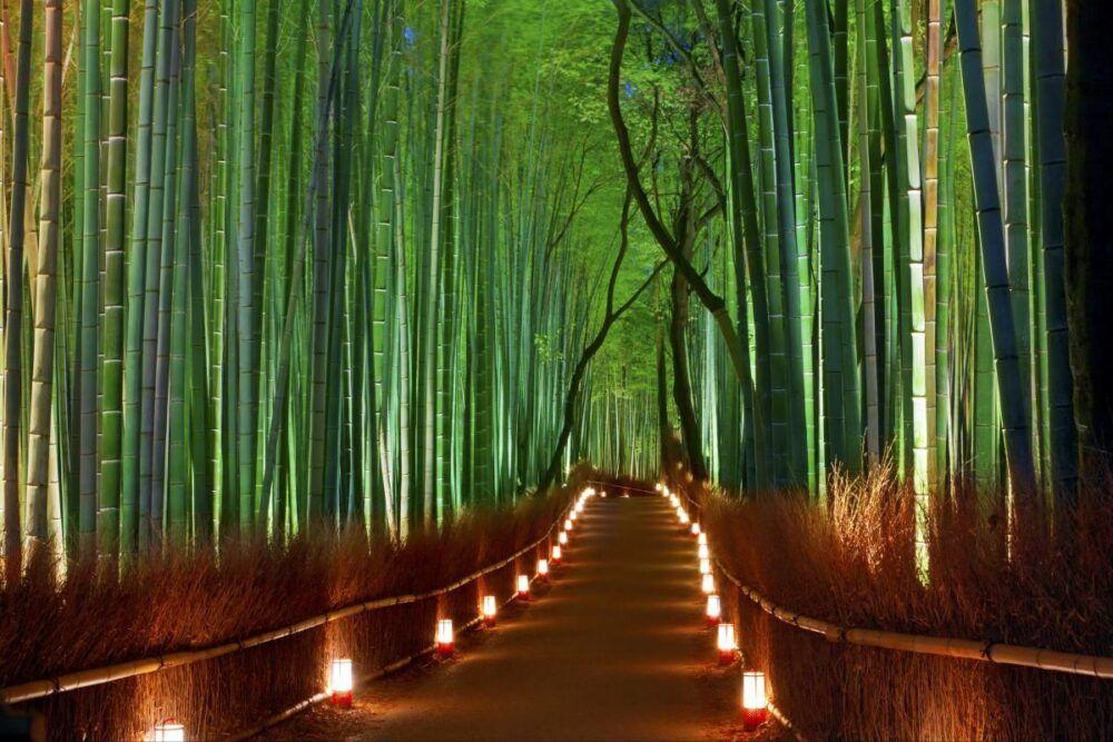 La forêt de bambous de Kyoto : Le guide complet 5