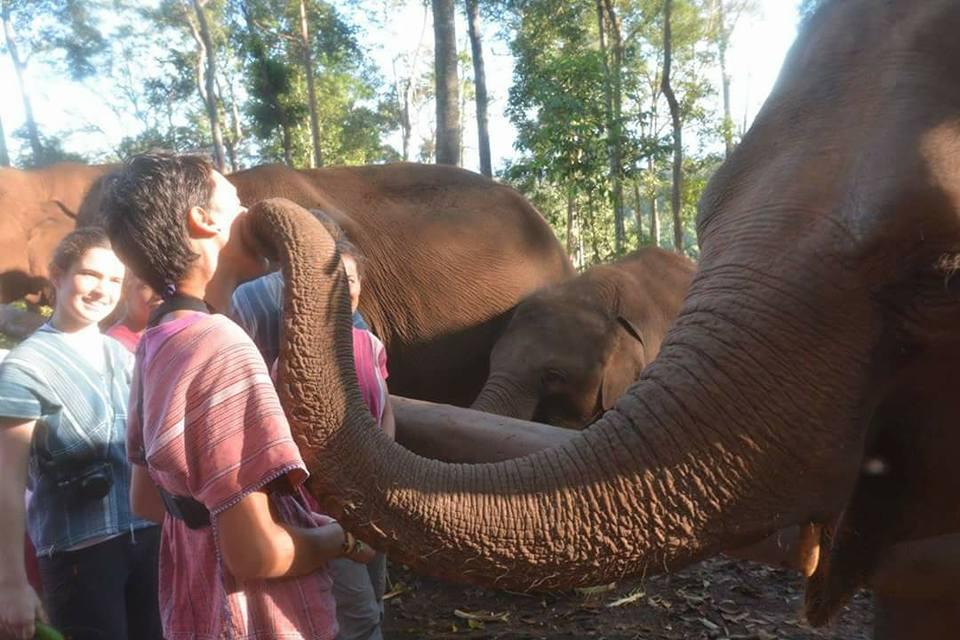 Visite d'un sanctuaire d'éléphants